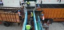 Ribuan Sapi Australia Tiba di Sumatra Utara Demi Tekan Harga